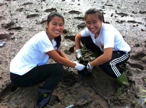 Mangrove Salvaging