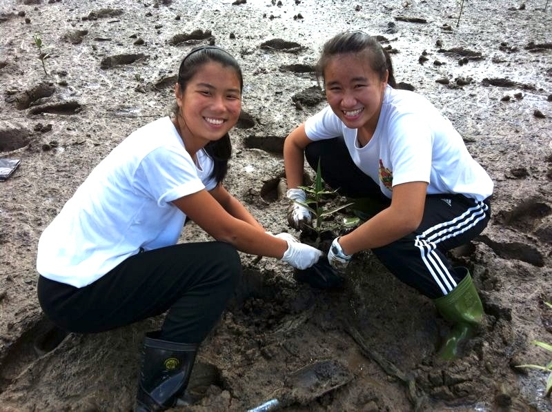 Mangrove Salvaging