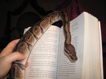 snake and book time (3)
