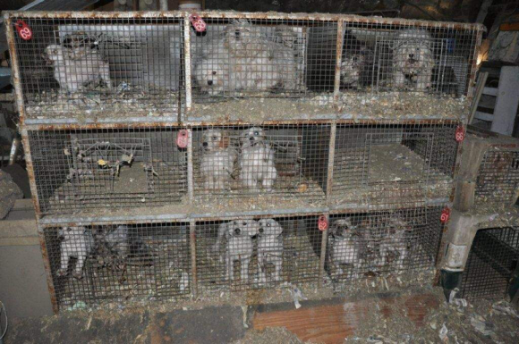 The Hidden Ills of Puppy Mills – Word of Mouth